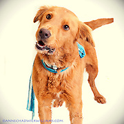 Great dog photos are helping shelter dogs get adopted.