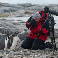 A tourist photographs young Gentoo Penguins on Petermann Island, Antarctica.
