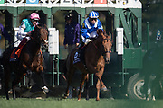 Breeders' Cup Mile (Race 8) (Turf) <br /> November 3, 2018: Expert Eye #7, ridden by Frankie Dettori, wins the Breeders' Cup Mile on Breeders' Cup World Championship Saturday at Churchill Downs on November 3, 2018 in Louisville, Kentucky.