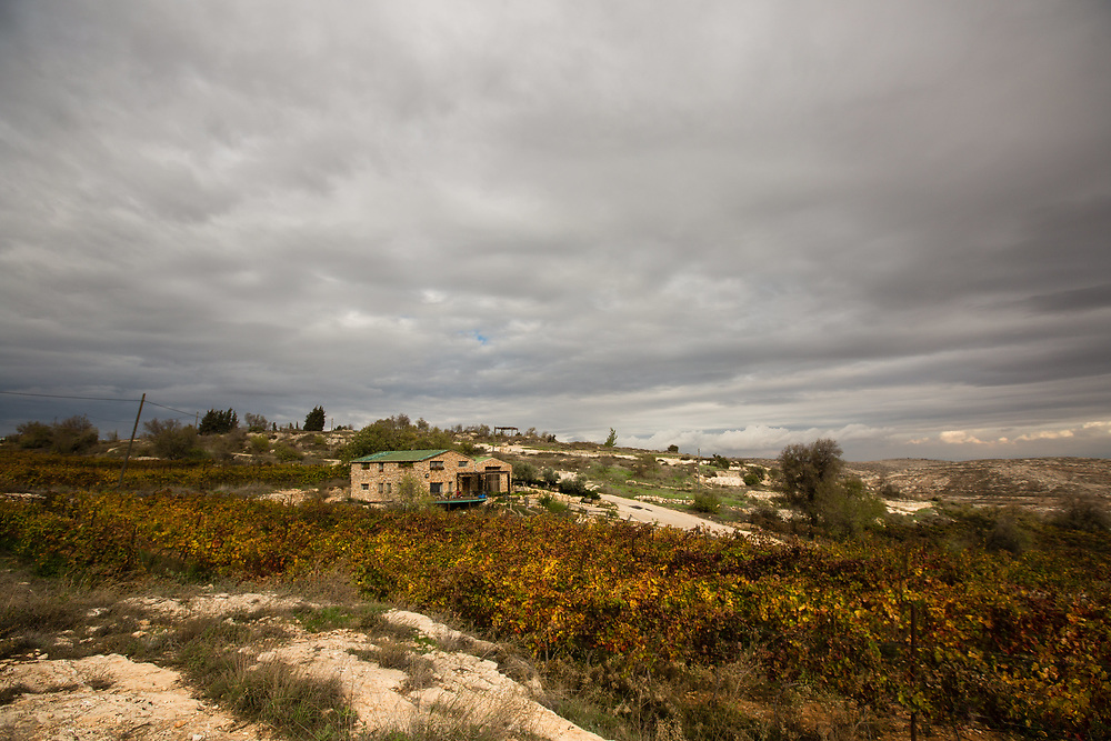 A general view of Psagot Vineyard, in the West Bank Jewish settlement of Psagot, near the Palestinian West Bank city of Ramallah, on November 17, 2015.
