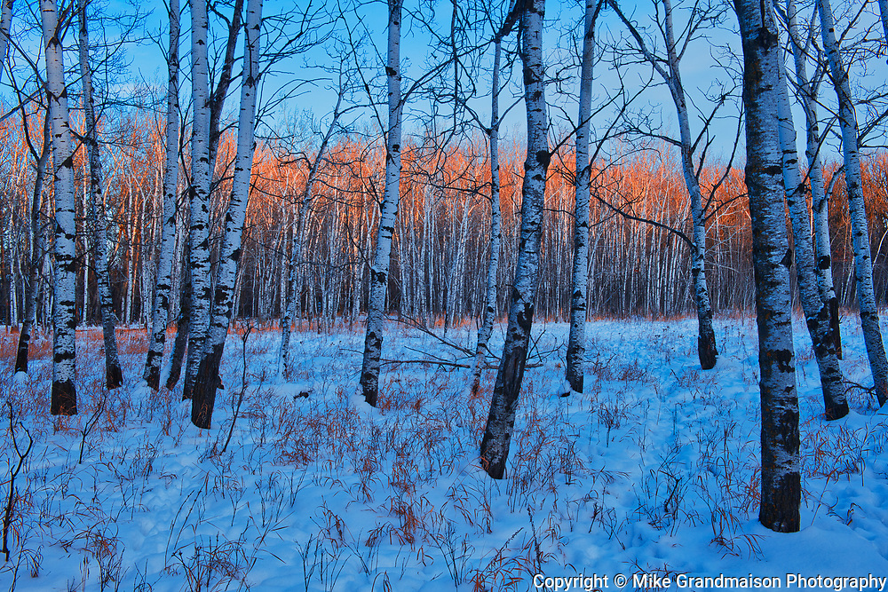Bois des Esprits in the Seine River Forest at sunset<br /><br />Manitoba<br />Canada