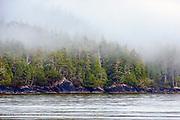 Coastal Rainforest in Tofino, British Columbia, Canada