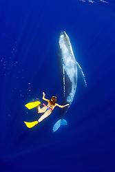 woman snorkeler and humpback whale, Megaptera novaeangliae, Hawaii, USA, Pacific Ocean, MR