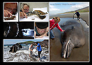 Kevin Flannery of Dingle Oceanworld.<br /> Picture: macmonagle archive<br /> e: info@macmonagle.com