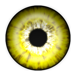 yellow eye iris eye iris eye iris