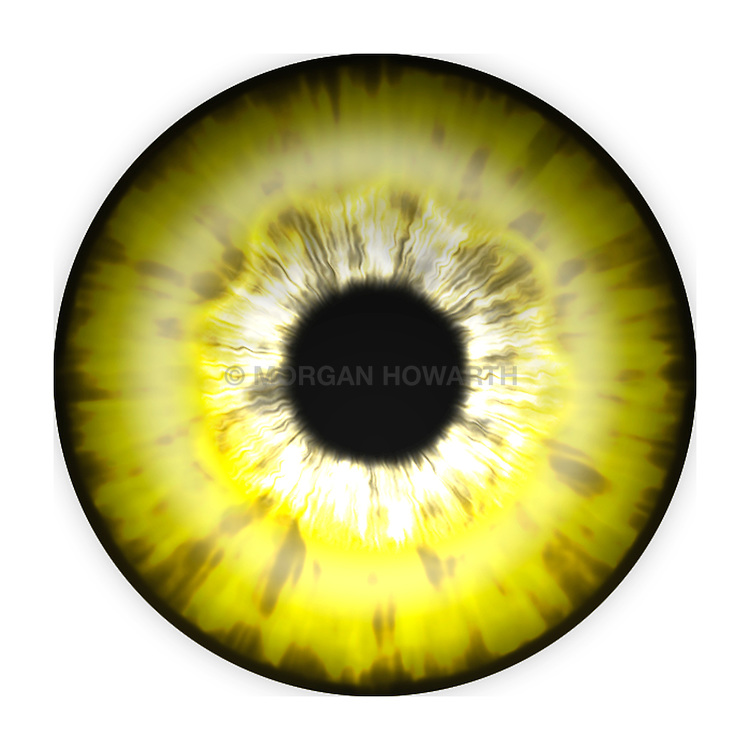 yellow eye iris eye iris eye iris