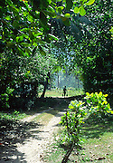 Country lane and trees, La Digue island, Seychelles