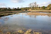 Saltmarsh habitat flooded at high tide, near Shingle Street, Suffolk, England, UK