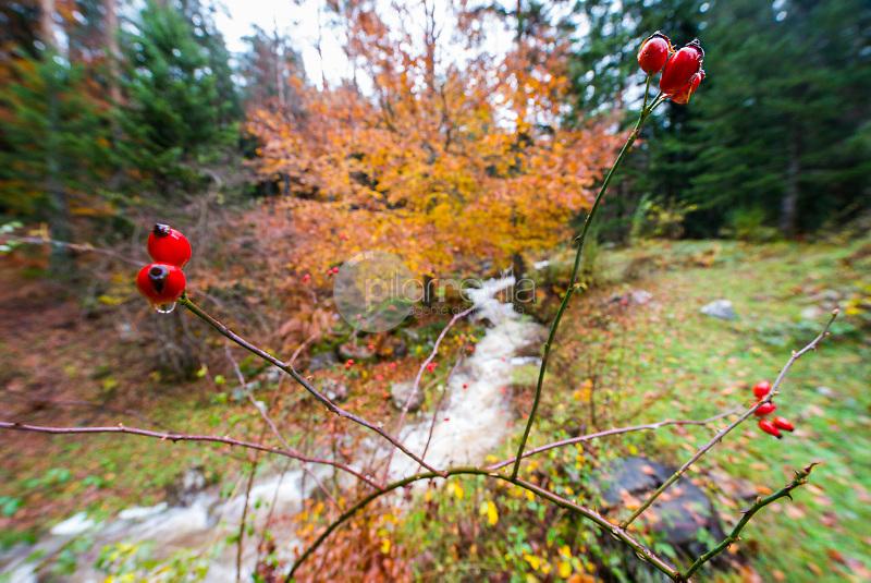 Arroyo en otoño en la Selva de oza. Valle de Hecho. Parque Natural de los Valles Occidentales. Pirineos. Huesca ©ANTONIO REAL HURTADO / PILAR REVILLA