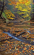 Fall leaves on stream. near Susquehanna River, York Co., PA
