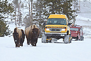 Winter visitors watching bison in Yellowstone National Park Wyoming