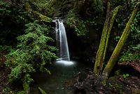 090-P103247<br /> <br /> Big Basin Redwoods State Park<br /> © 2019, California State Parks.<br /> Photo by Brian Baer