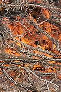 Detail of a large yard debris file. Western Oregon.