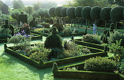 Topiary in the East garden at Hatfield House including avenue of clipped lollipop oaks.