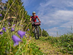 Mountain biker riding amidst woods of Black forest, near Todtnauberg, Baden-Wuerttemberg, Germany