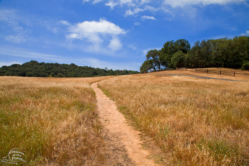 The Musch Trail, Topanga State Park, Los Angeles County, California, USA