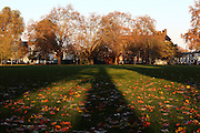 Shadows from a London Plane tree on Eel Brook Common in Parsons Green, on a sunny afternoon in autumn