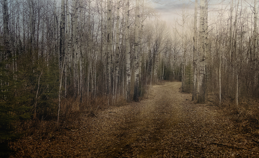 Hiking along Thunder Bay's Centennial Park. This part of the winding trail features bare, tall-standing birch trees. Captured early May, the trail is often isolated long enough to  enjoy a serene and still scene.