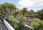 Cactus plants in garden at Fundación César Manrique, Taro de Tahíche, Lanzarote, Canary islands, Spain