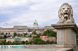Lion Sculpure of Chainbridge over Danube river with castle in background, Budapest, Hungary