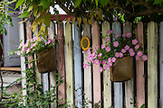 Colorful pastel fence with flowers in Schaffhausen, Switzerland, Europe.