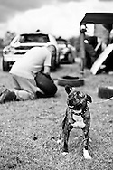 A competitor's dog poses for the camera before the race meeting at Smallfield Raceway, Surrey, UK on the 10th of July 2011 (photo by Andrew Tobin/SLIK images)