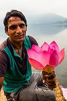 Lotus flowers, Dal Lake in Srinagar, Kashmir, Jammu and Kashmir State, India.