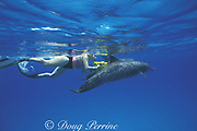 Dr. Denise Herzing, of the Wild Dolphin Project, uses underwater video camera to record the behavior of wild Atlantic spotted dolphins, Stenella frontalis, Little Bahama Bank, Bahamas