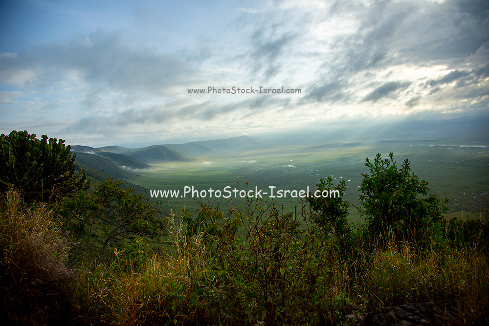 Ngorongoro Conservation Area, is a protected area and a World Heritage Site located 180 km (110 mi) west of Arusha in the Crater Highlands area of Tanzania. The area is named after Ngorongoro Crater (caldera) a large volcanic caldera within the area.