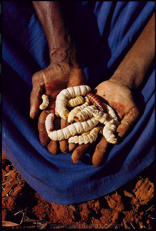 Kitty Miller, an aboriginal grandmother from the Australian town of Alice Springs, holds witchetty grubs (Witchetty grubs are the larvae of cossid moths) freshly dug from the roots of the witchetty bush in  Australia's outback. To make this photograph Peter Menzel camped for several days with Kitty and a group of women who went in search of witchetty grubs and honey ants. (page 19)
