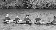 London, Great Britain.<br /> Oxford University BC, M4+. Bow A.N. OTHER 2. Chris CLARK, 3. Dan LYONS and Stroke Chris PENNY, cox A.N.OTHER. competing in the 1986 Fours Head of the River Race, Reverse Championship Course Mortlake to Putney. River Thames. Saturday, 15.11.1986<br /> <br /> [Mandatory Credit: Peter SPURRIER;Intersport images] 15.11.1986