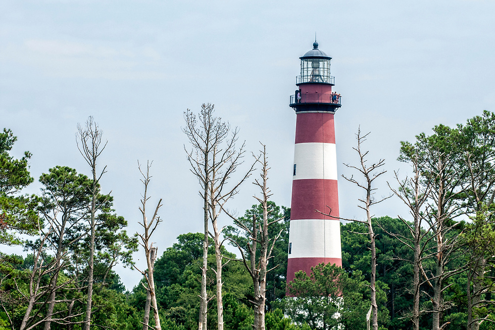 View of the Assateague Light during Daisey's Island Cruises two-hour tour of Chincoteague, Assateague, and Wallops Islands in Chincoteague Island, VA on Thursday, July 28, 2016. Copyright 2016 Jason Barnette