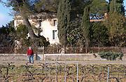 Bernard Jany Chateau la Condamine Bertrand. Pezenas region. Languedoc. Vines trained in Cordon royat pruning. The main building. Owner winemaker. France. Europe. Vineyard.