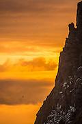 Bird cliff at Runde, Herøy, Norway in evening sun| Fuglefjellet på Runde, Herøy, Norge i kveldssol.