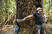 Visitors join hands around the trunk of a 100-year-old Agathis tree (Agathis borneensis), the biggest in Indonesia, at the Arsari Lestari conservation forest in Penajam Paser Utara district, East Kalimantan, Indonesia, on March 12, 2016. The plan for the Arsari Lestari conservation area is to preserve the virgin rainforest while creating value for ICTI and local people in a production-protection system that reduces emissions. <br /> (Photo: Rodrigo Ordonez)