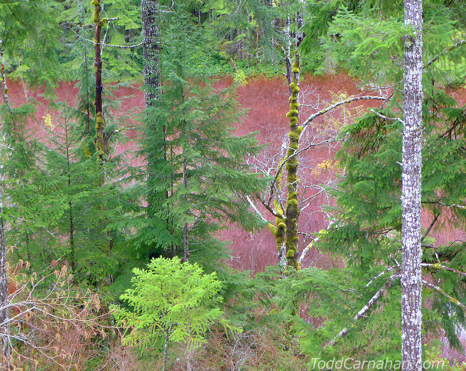 hardhack swamp wetland