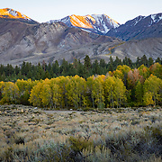 The Fall season in the Eastern Sierras is one of the most beautiful seasons to visit. Trees along Mammoth Creek in the town of Mammoth Lakes are in full bloom.