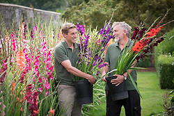 Tom Brown and ? with the gladiolus trial at Parham House