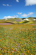 Scenic Spring Bloom of Central Valley