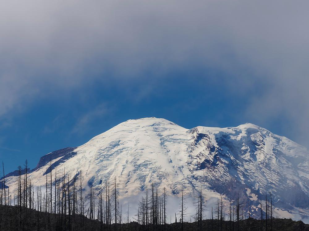 United States, Washington, Greenwater, Mt. Rainier and burned trees, veiwed from Noble Knob hike