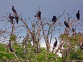 Wyspa Kormoranów