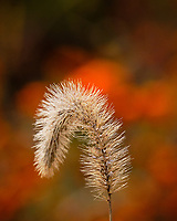 Grass. Image taken with a Fuji X-H1 camera and 200 mm f/2 lens + 1.4x teleconverter