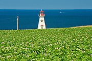 Cape Tryon Lighthouse, potatoes and Gulf of St. Lawrence<br /> Cape Tryon<br />