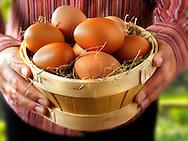 Basket of Fresh Burford Brown free range organic Eggs