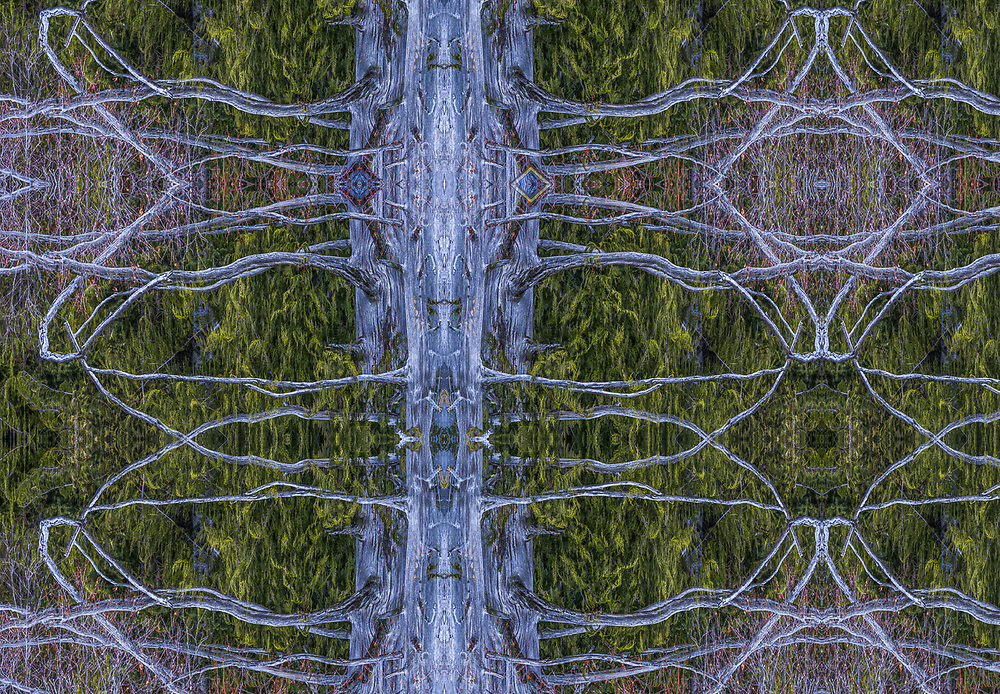 """""""The Forest Has Eyes"""", derivative image from a photo of a weathered tree form, early spring, Olympic National Park, Washington, USA"""