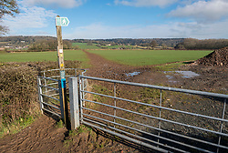 © Licensed to London News Pictures; 06/02/2021; Backwell, North Somerset, UK. Damage and widening of a public footpath where people have been walking and running across farmland is seen during the third UK lockdown of the Covid-19 coronavirus pandemic in England. People are allowed to go out for exercise but the numbers of people boosted by those on furlough and not at work is causing damage to green spaces and parks. The National Farmers Union have put up signs asking people not to widen footpaths, go off route or walk on crops. Photo credit: Simon Chapman/LNP.