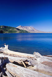 Spirit Lake, Downed Trees and Mt. St. Helens, Mt. St. Helens National Volcanic Monument, Washington, US