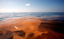 05 May 2010. Venice, Louisiana. Deepwater Horizon, British Petroleum environmental oil spill disaster. <br /> Gluiding through a mix of oil and dispersant, 10 miles south of Venice Marina and approximately 34 miles from the site of the Deepwater Horizon's sunken oil platform. The sludge is a gelatinous mix with the consistency of diarrhea, sometimes clumped together in large masses so thick you can not see the ocean through it. The water, for miles and miles is filled with small pea shaped clumps, most the size of every kind of fish food available from small fish shape to shrimp to plankton. It is everywhere. The sheen on the surface is everywhere. It stretches for miles and miles and miles and miles and miles. Dead Jellyfish shrivel in the mix, the main seafood of turtles passing through at this time of year. What have we done?<br /> Photo credit; Charlie Varley/varleypix.com