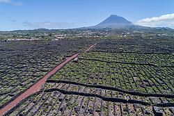 Luftaufnahme der Weingaerten auf der Insel Pico mit Vulkan Pico im Hintergrund, Azoren / Aerial view of the vineyard on Pico Island with volcano Pico in backgraund, Acores