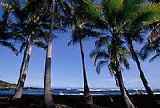 Punaluu Black Sand Beach, Punaluu, Island of Hawaii, Hawaii, USA<br />